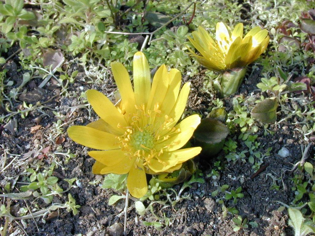 早春に咲く花 🏵